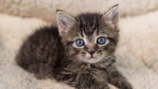 puppy of kitten