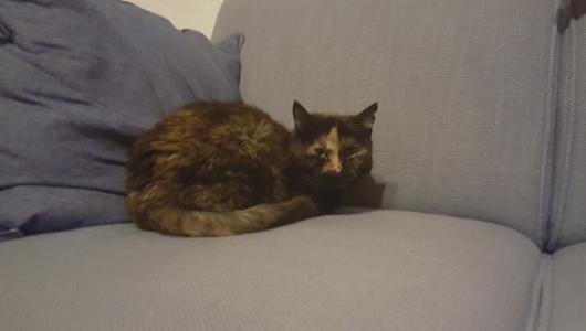 Javel (vorige kat)