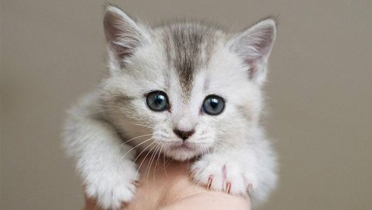 best-treats-for-kittens