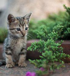 230px-Kitten_in_Rizal_Park,_Manila