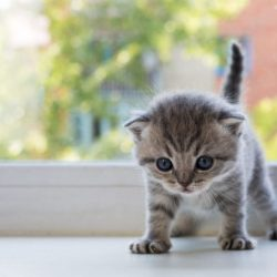 kitten-anxiety_canna-pet-e1490739366728-1024x683
