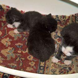 prosperke voor kittens