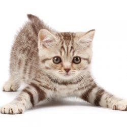 nieuwe-kat