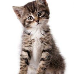 huisdier-kat-3_0