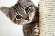 kitten afbeelding