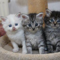 Kittens-3-op-een-rij