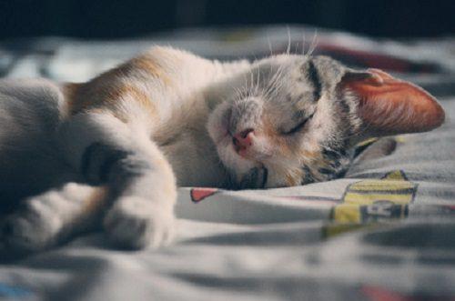 kattenpensions
