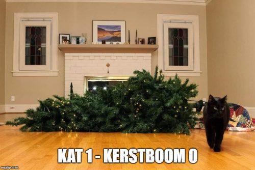 kerstboom kat