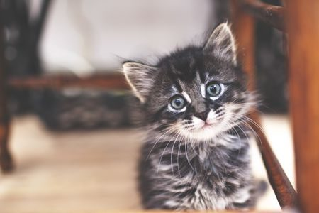 kitten-looking-at-camera-521981437-57d840213df78c583374be3b