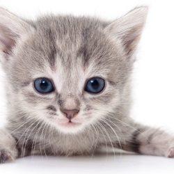 4306502_092118-wls-kitten-generic-img