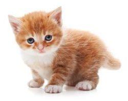 kitten-e1498822359878