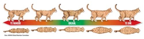 kattenchart