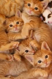 ros kitten