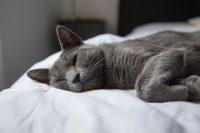 kat in bed