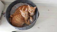 kattenmand max&luna