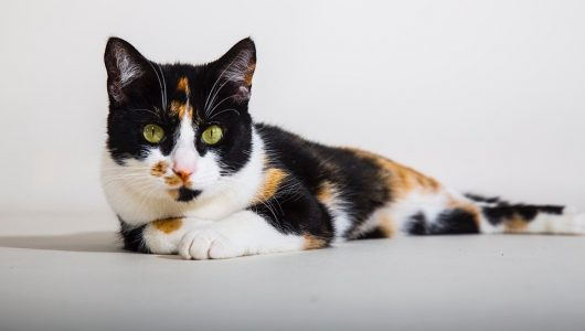 cats-1332320_960_720