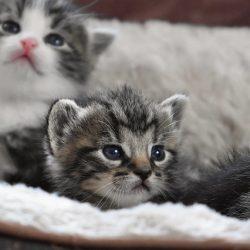 cat-baby-4208561_640