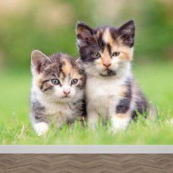 FB-108084035-kittens