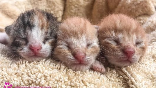 about-kitten-rescue-curacao