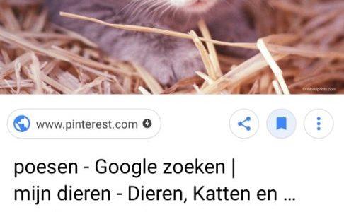 Screenshot_20191006-091546_Google