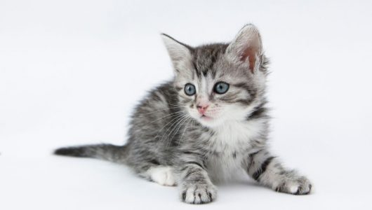 kitten-report