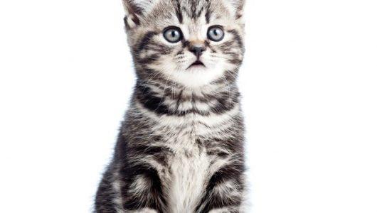 stickers-schattige-zwarte-kitten-kat-geisoleerd-op-wit.jpg