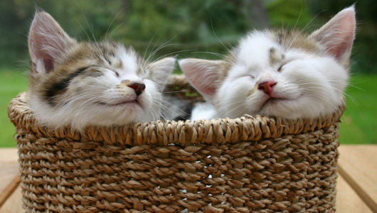 Finding-homes-for-your-kittens-1