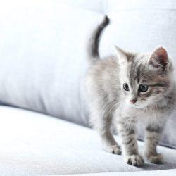 geschlecht-bei-kitten-bestimmung-768x512
