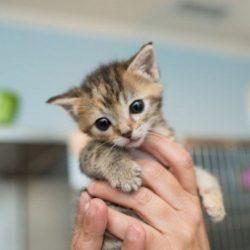 de-beste-tips-voordat-je-een-kitten-in-huis-neemt
