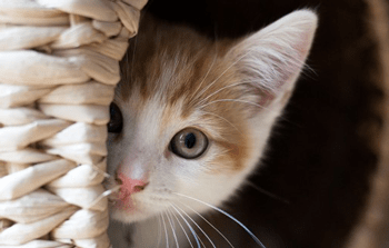 -kat gezocht