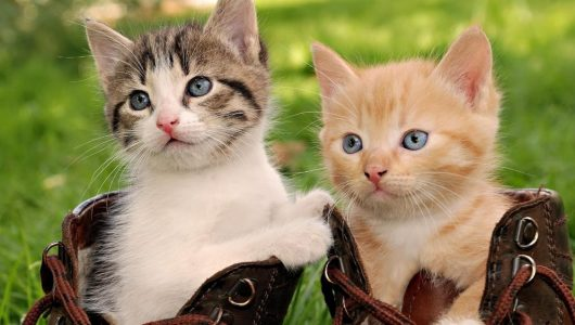 cute_cats_in_boots-1920x1080