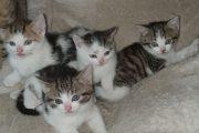 kitten 12 maart 20 3 (1)