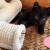 Kitten Nevertéte 2