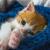 Kattenverzekering voor je kittens.