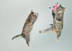 Spelende katten