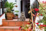 katten en planten