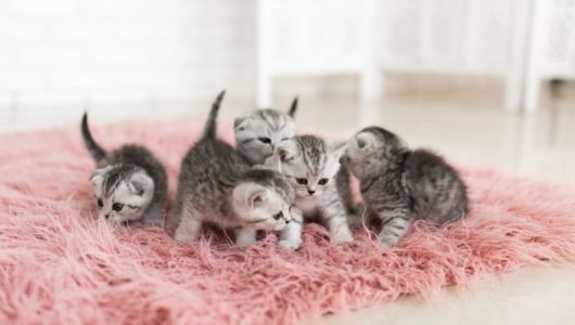 cropped-kittens